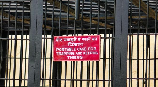 Udaipur, Redux