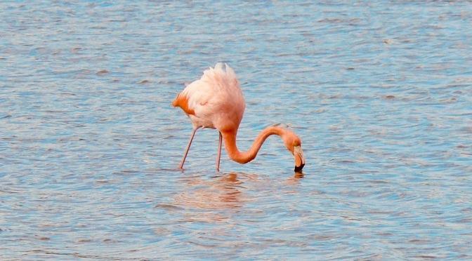 Galápagos: Birds Edition